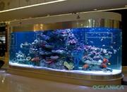 Аквариумные рыбки морские и пресноводные