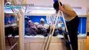 Чистка аквариумов морских и пресноводных в алматы